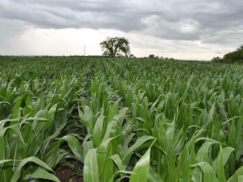 High Tillable 40 ac Row Crop Farm : Winston : Daviess County : Missouri