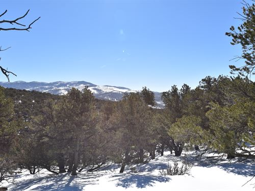 Mountain View With Trees : Fort Garland : Costilla County : Colorado