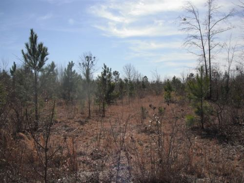 50 Acres, Chesterfield County, Sc : Pageland : Chesterfield County : South Carolina