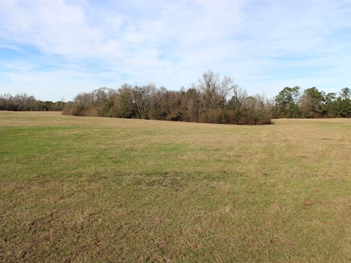 Rolling Pastureland With Pond : Little Texas : Macon County : Alabama