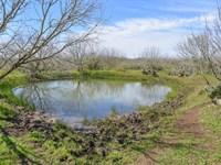 Atascosa Land : Pleasanton : Atascosa County : Texas