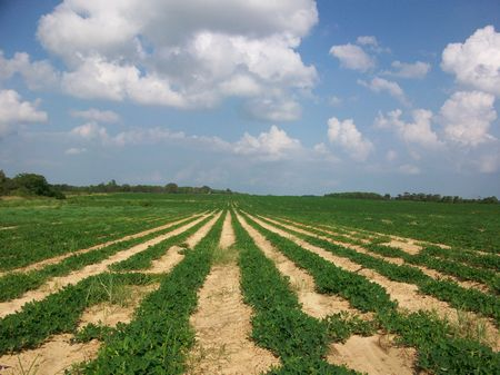 105 Acres Irrigated Farmland : Hawkinsville : Pulaski County : Georgia
