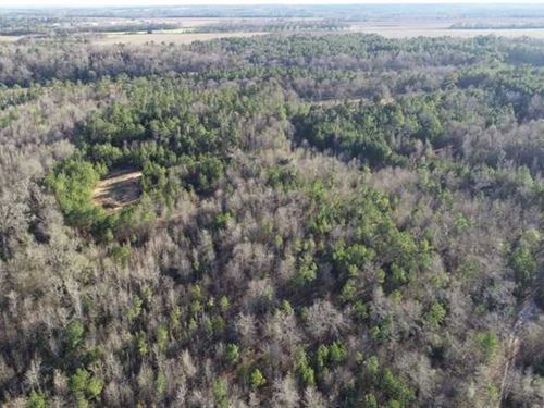 134 Acres Patsiliga Creek Land : Reynolds : Taylor County : Georgia
