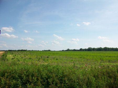 112 Acres Of Rich Farming Soil : Hawkinsville : Pulaski County : Georgia