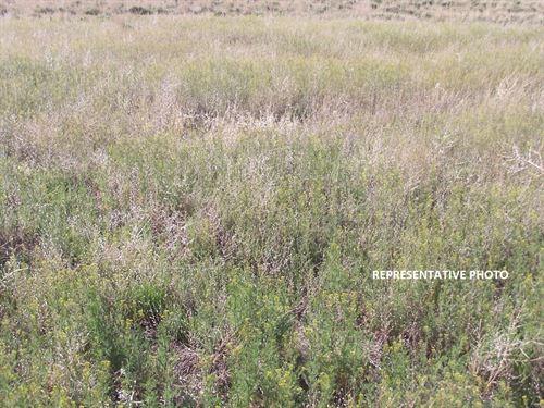 Crp Farmland in Baca County, CO : Springfield : Baca County : Colorado