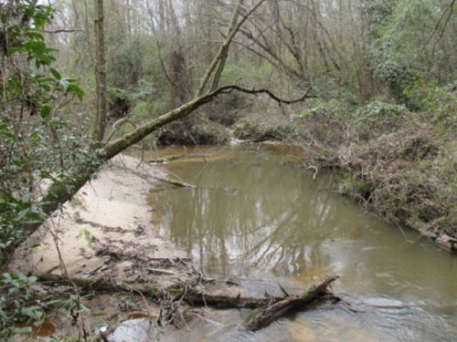 63 Acres On Jaybird Creek : Prentiss : Jefferson Davis County : Mississippi