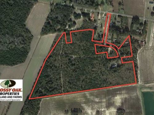 35 Acres of Hunting Land For Sale : Evergreen : Columbus County : North Carolina