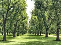 Llano River Pecan Farm : Junction : Kimble County : Texas