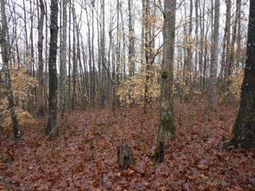 27.16 Acres, Wooded, Views : Moss : Clay County : Tennessee