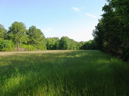 Mungin Creek - 434 Acres : Levy : Jasper County : South Carolina