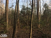 Moonville Wooded Homesite : Moonville : Greenville County : South Carolina