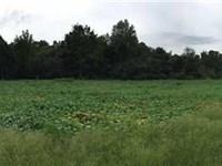 435 Acres, Hunting Retreat : Bonnieville : Hart County : Kentucky