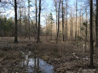 160 Ac, Creek Bottom Hunting With : Columbia : Caldwell Parish : Louisiana