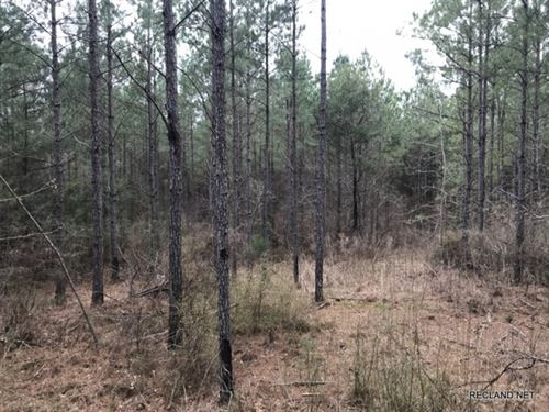 40 Ac, Pine Timberland : Hico : Union Parish : Louisiana