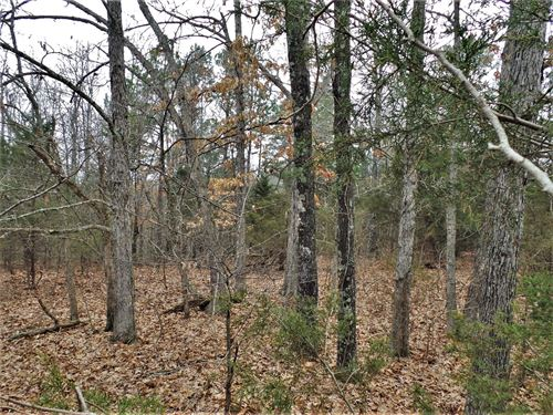 Acreage Dead End Road, Bull Shoals : Yellville : Marion County : Arkansas