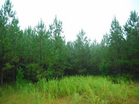 103 Acres Near Waterloo, S.c. : Waterloo : Laurens County : South Carolina
