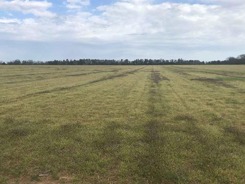 Open Farmland & Timber : Warner Robins : Houston County : Georgia