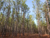 92 Acres in Lancaster, Lancaste : Lancaster : Lancaster County : South Carolina
