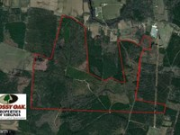 761 Acres of Hunting Land For Sale : Hallwood : Accomack County : Virginia