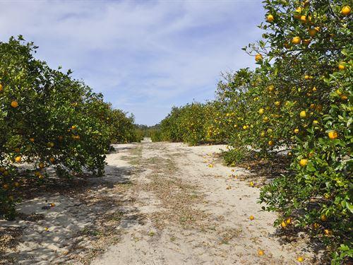 Babson Park 8 Acre Valencia Grove : Babson Park : Polk County : Florida