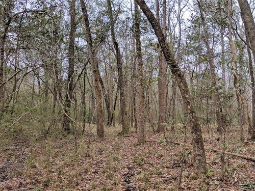 Taynard Branch Tract : Brundidge : Coffee County : Alabama