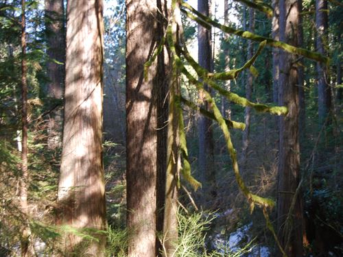 Lake Cochran : Monroe : Snohomish County : Washington