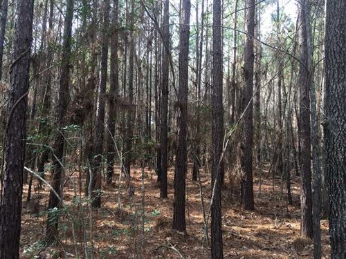 Knight Tract, Covington County, MS : Collins : Covington County : Mississippi