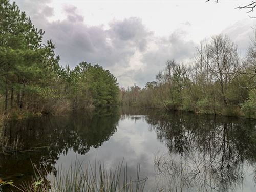 41.45 Acres In Forrest County In Ha : Hattiesburg : Forrest County : Mississippi