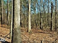 Coaling Timber Investment And Hunti : Coaling : Tuscaloosa County : Alabama