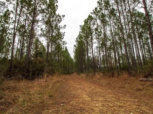 480 Acres In Marion County In Colum : Columbia : Marion County : Mississippi