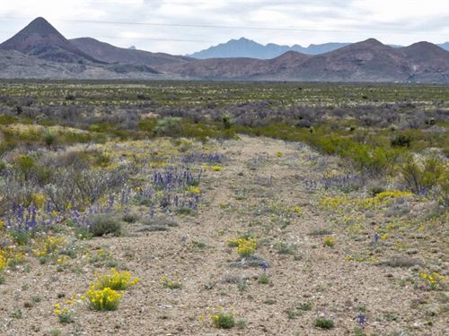 40 Acres With Great Mountain Views : Terlingua : Brewster County : Texas
