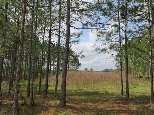 18.31 Acres For Sale In Live Oak : Live Oak : Suwannee County : Florida