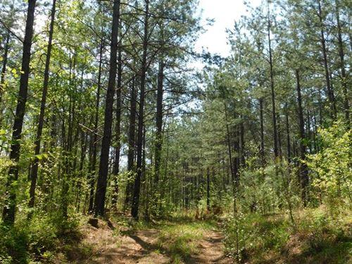 138 Acres With Creek Near I-20 : Ranburne : Cleburne County : Alabama