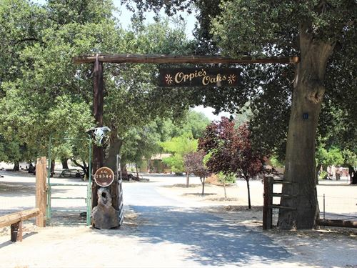 Beautiful Oak Sanctuary : Boulevard : San Diego County : California