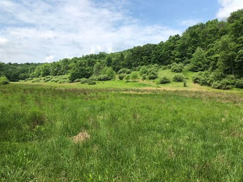 Beautiful 60 +/- Acres Of Country : New Milton : Doddridge County : West Virginia