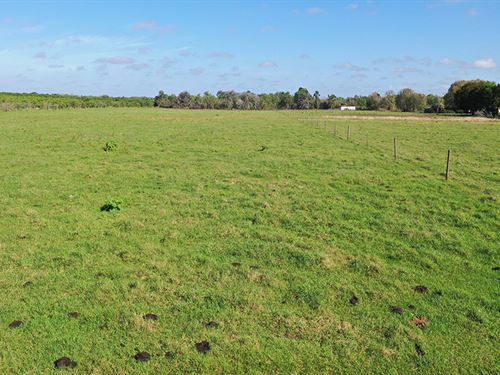 Weita Road Pasture : Bartow : Polk County : Florida