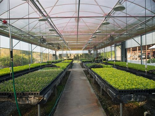 Operational Plant Nursery : Emerson : Bartow County : Georgia