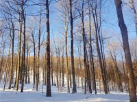 Barnard Village Forest : Barnard : Windsor County : Vermont
