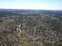 50 Acre Hunting Paradise : Leggett : Polk County : Texas