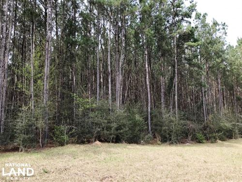 Rural Homesite With Timber : Columbia : Marion County : Mississippi