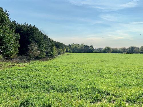 10 Acre Paved Road Frontage Land : Chancellor : Coffee County : Alabama