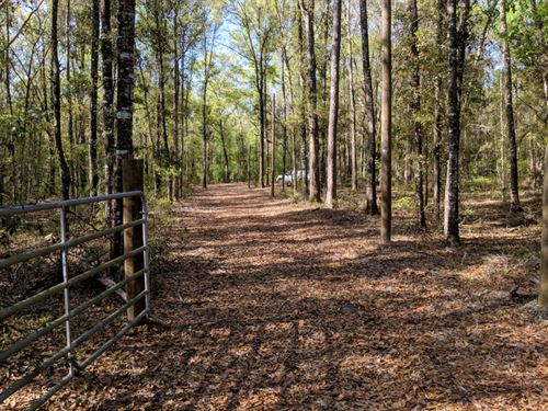 Great Homesite In Subdivision : Greenville : Jefferson County : Florida