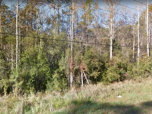 Wakulla County, Fl $45,000 Neg : Crawfordville : Wakulla County : Florida