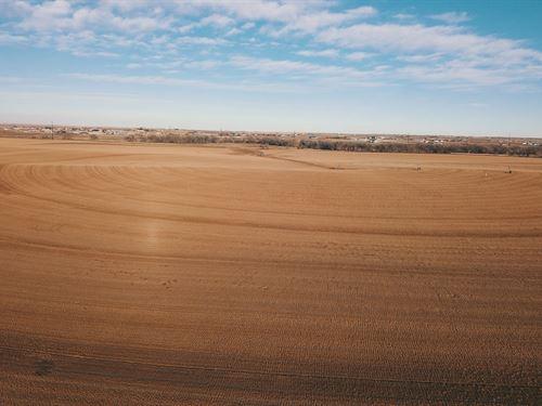 Emerald Sod Farm : Commerce City : Adams County : Colorado
