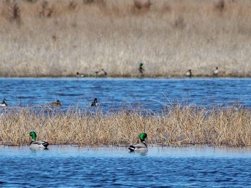 Ducks & Bucks, Kansas Dream Oa : Alden : Rice County : Kansas