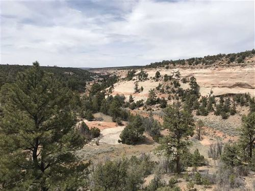 Akt Hunting Ranch : Ramah : Cibola County : New Mexico