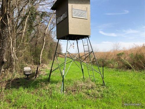 40 Ac, Hunting With Camp In Oak RI : Oak Ridge : Morehouse Parish : Louisiana