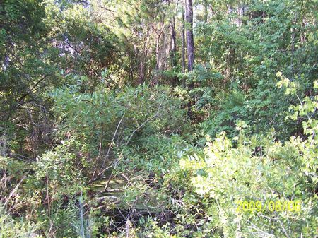 Great Hunting Property : Lake Butler : Union County : Florida