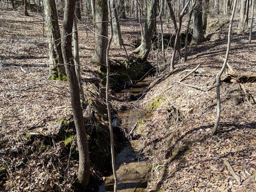 Napolean Pines Tract C 15+/- Acres : Woodland : Randolph County : Alabama