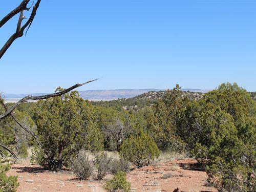 40 Acres of Land Near Seligman AZ : Seligman : Yavapai County : Arizona